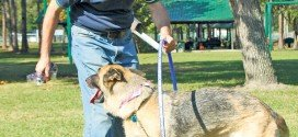 'Bark for Life' at city park