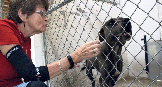 Her passion: rescuing animals
