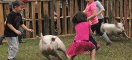Greased pig scramble highlights Fall Festival